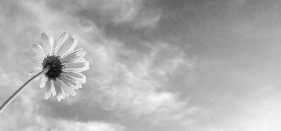 mvo-zwart-wit.jpg